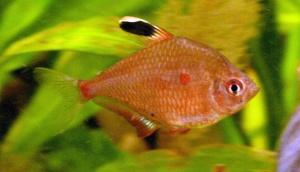 Pero mira como beben los peces en el río: análisis